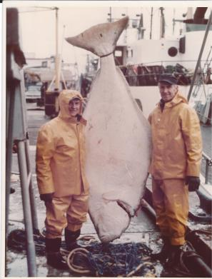 Knut with 435 pound halibut
